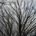 早春の森林植物園_02