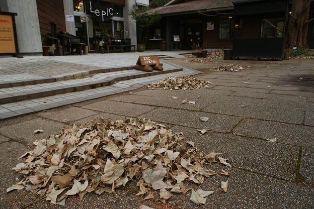 森林植物園 落ち葉のサークル_02