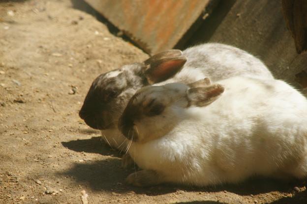 ウサギの国_01