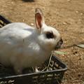 ウサギの国_03