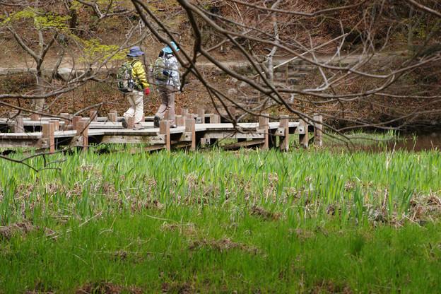 青葉と長谷池