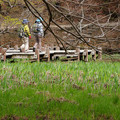 Photos: 青葉と長谷池