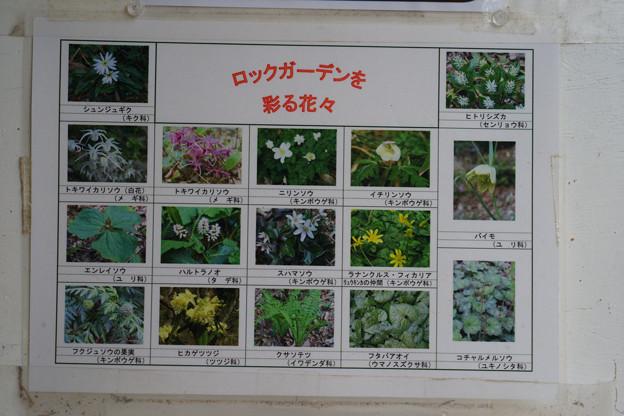 ロックガーデンの草花