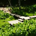 写真: 六甲高山植物園 湿生植物区