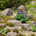 写真: ロックガーデンの草花