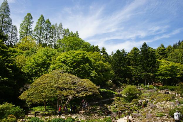 六甲高山植物園と青空