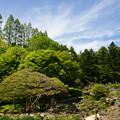 写真: 六甲高山植物園と青空