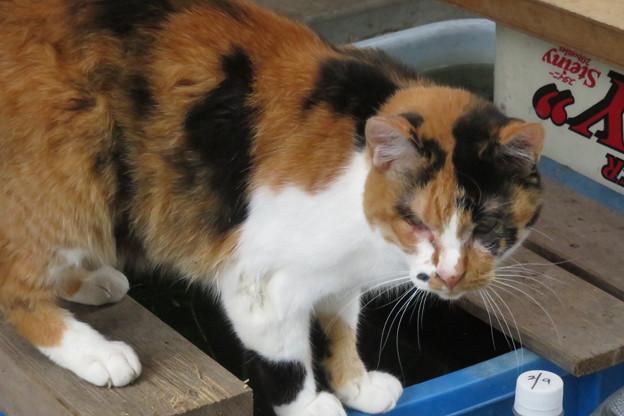 Photos: ご近所の猫_01