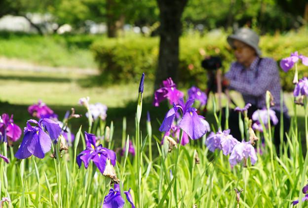 花しょうぶを撮る_01