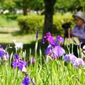 写真: 花しょうぶを撮る_01