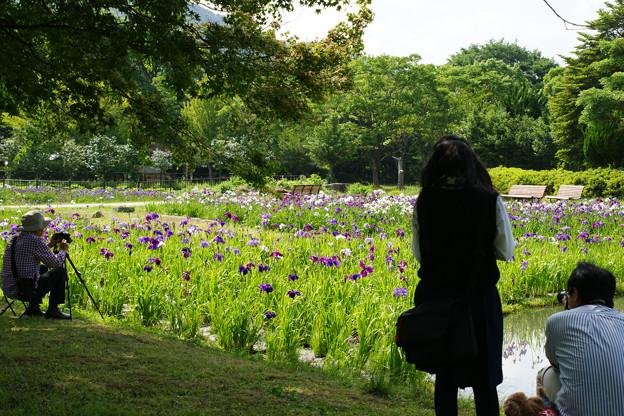花しょうぶを撮る_02
