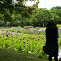写真: 花しょうぶを撮る_02