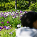 写真: 花しょうぶを眺める