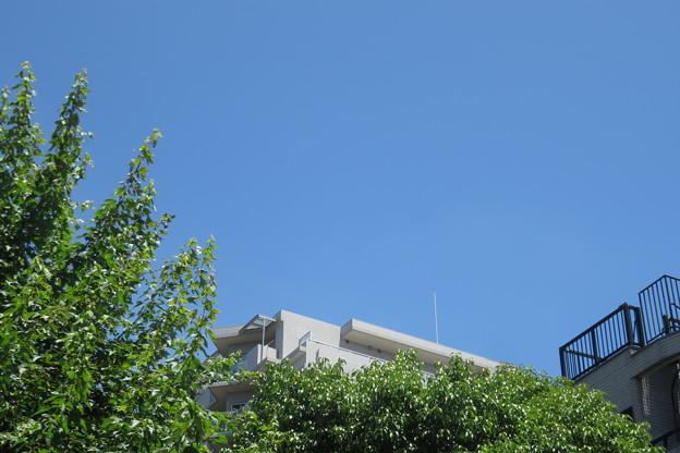 写真: 梅雨明けの青空