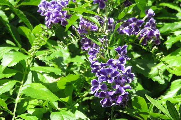 写真: 紫の花