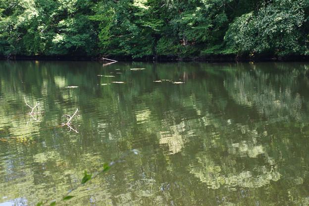 鯉が窪湿原 湖畔_02