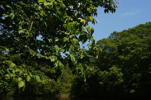 鯉が窪湿原 湖畔_04
