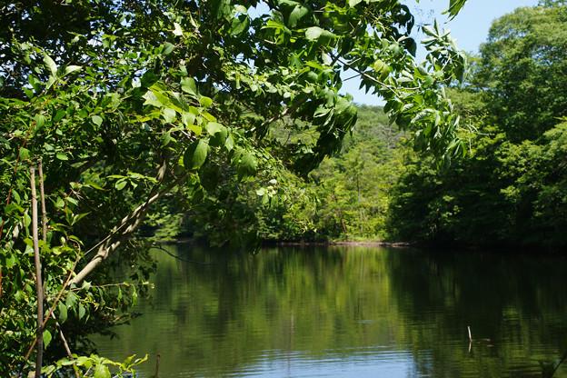 鯉が窪湿原 湖畔_05