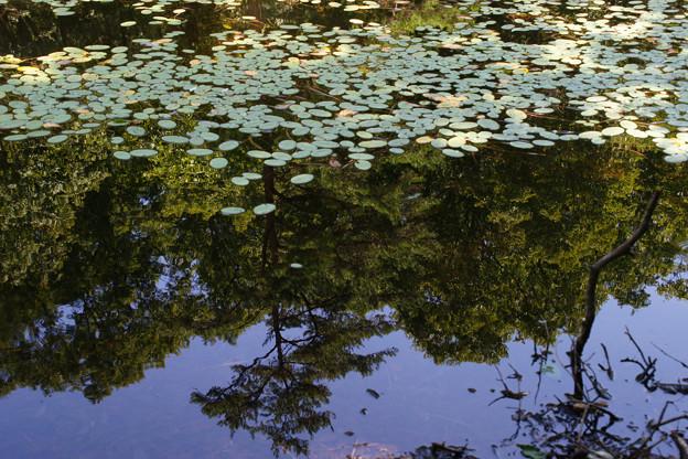 鯉が窪湿原 湖畔と水草_03