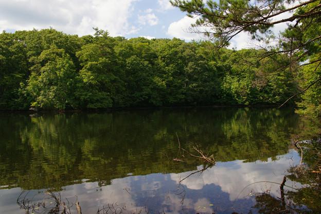 鯉が窪湿原 湖畔と青空_02