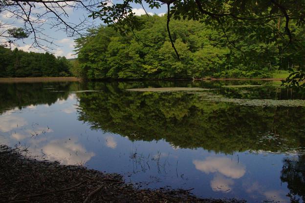 鯉が窪湿原 湖畔と青空_03