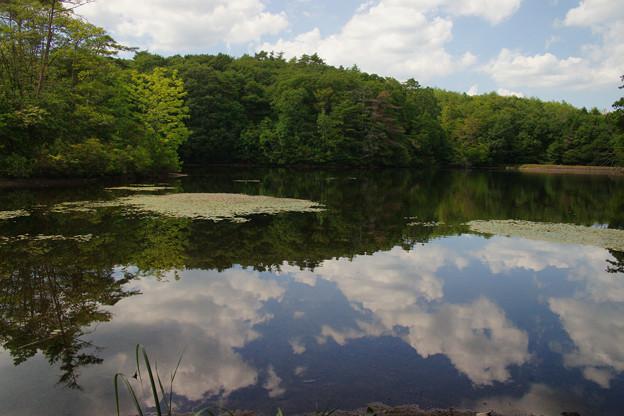 鯉が窪湿原 湖畔と青空_05