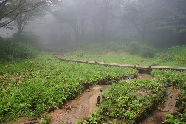 湿地帯を歩く_01