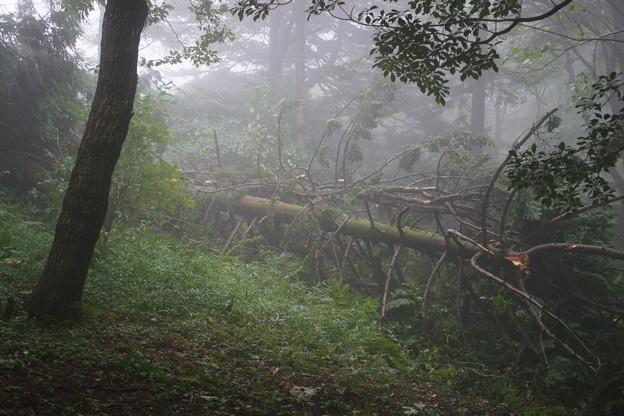 高山植物園の倒木_02