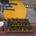 写真: しあわせの村 お月見_04