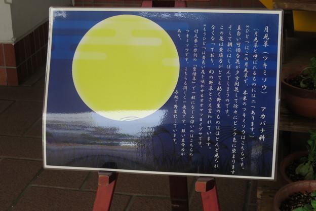 しあわせの村 お月見_05