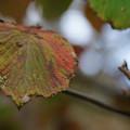 六甲高山植物園の紅葉_02