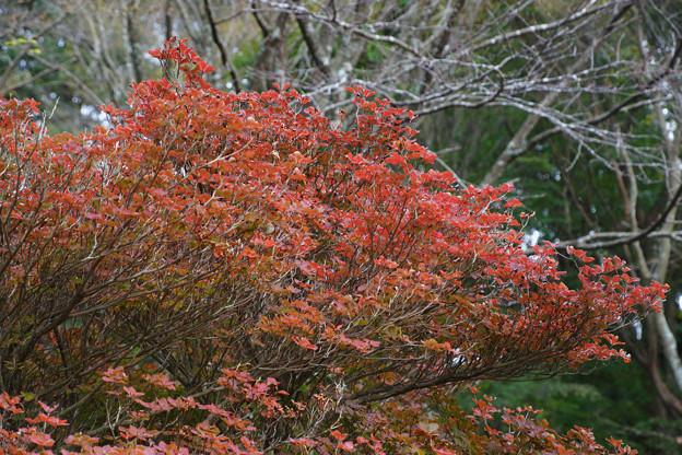 六甲高山植物園の紅葉_03