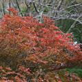 Photos: 六甲高山植物園の紅葉_03
