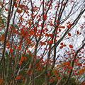 六甲高山植物園の紅葉_04