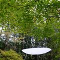 写真: U.KE.ZA.RAの木/オチバのカタチ_02
