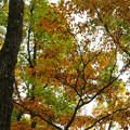 紅葉の林を歩く_01