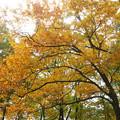 紅葉の林を歩く_03