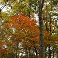 紅葉の林を歩く_05