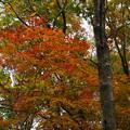 紅葉の林を歩く_06