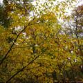 紅葉の林を歩く_07