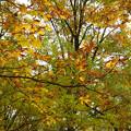 紅葉の林を歩く_09