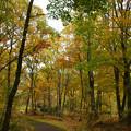 紅葉の林を歩く_10