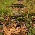 落ち葉の小径