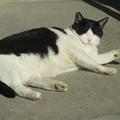 写真: ご近所猫_01