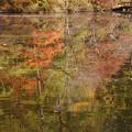 長谷池の紅葉_03