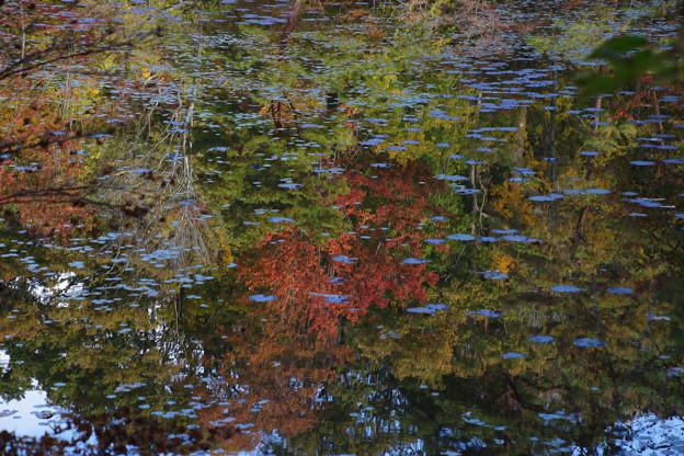 長谷池の紅葉_04