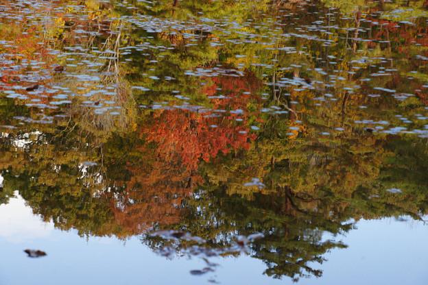 長谷池の紅葉_05