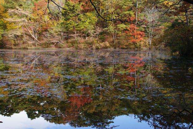 長谷池の紅葉_06
