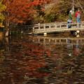 長谷池の紅葉_07