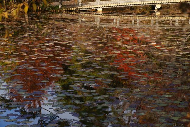 長谷池の紅葉_08